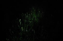 DSC_2008a