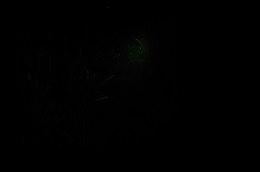 DSC_8463a